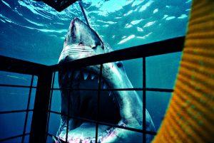 TV番組「サメの檻」から学ぶ